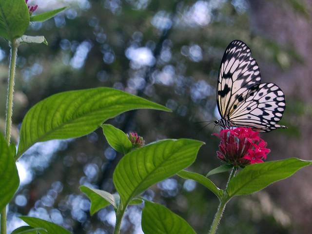 Paruparo Malagos Garden Resort Davao City Flickr