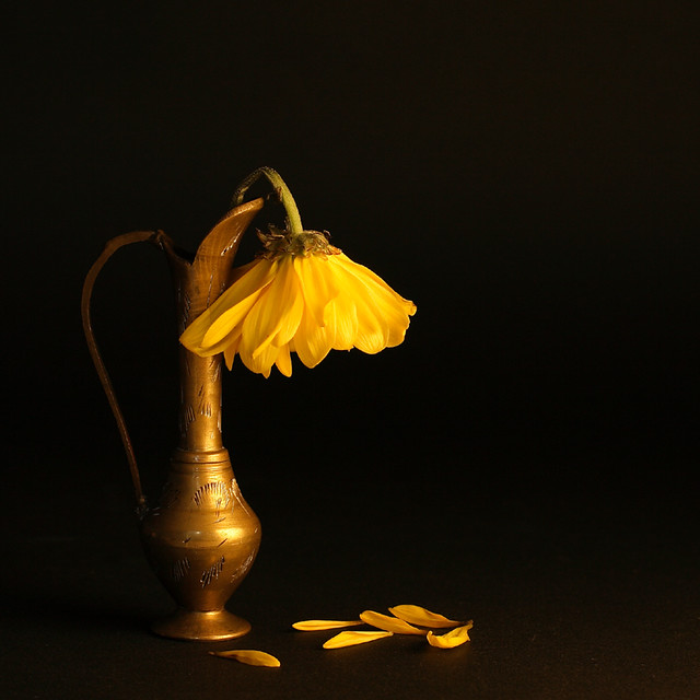 Fleur fânée