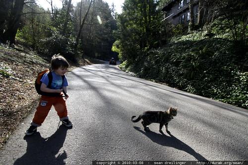 kitten straying far from home