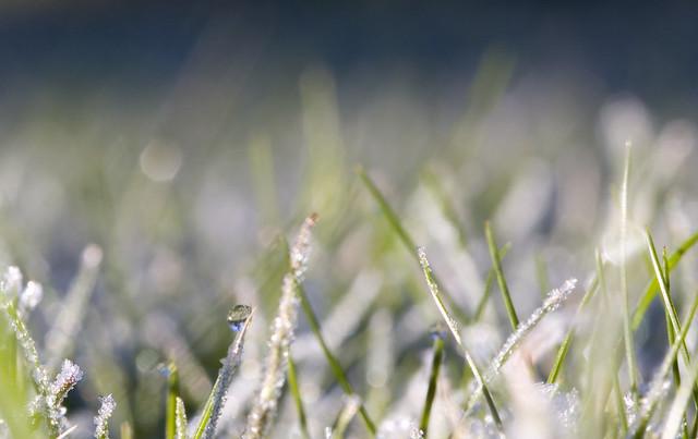 Ground Frost