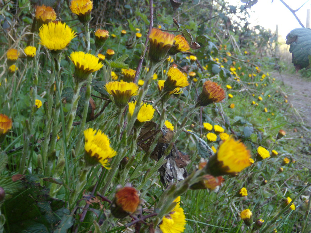 Coltsfoot Gerrards Cross to Cookham