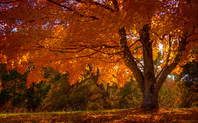 Autumn Trees | Flickr - Photo Sharing!