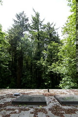 view of woods from roof