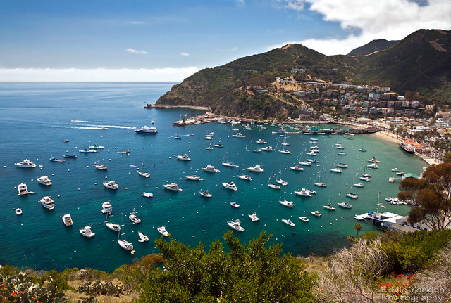 Download this Catalina Island picture