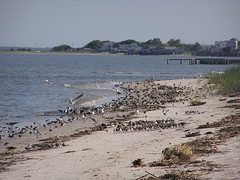 Cape May National Wildlife Refuge.