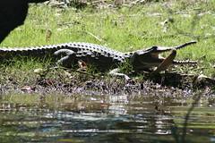 Corroboree Billabong Wetland Cruises