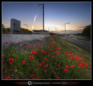Poppies near highway :: Vertorama