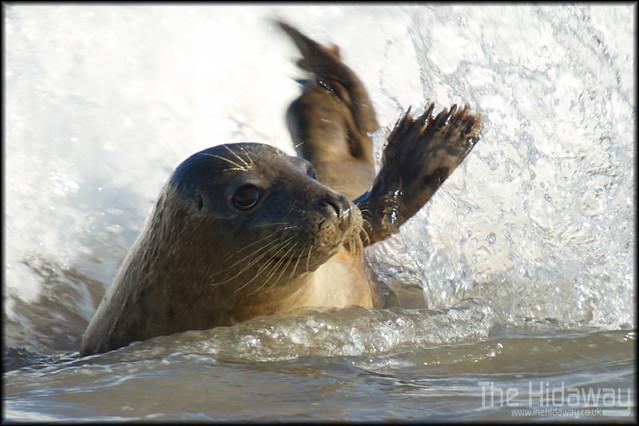 Cute Animals Waving Goodbye