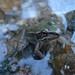 2010 06 Frog Release II