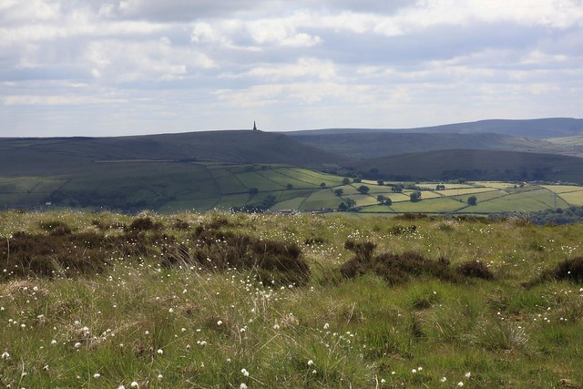 Stoodley Pike monument and cotton grass