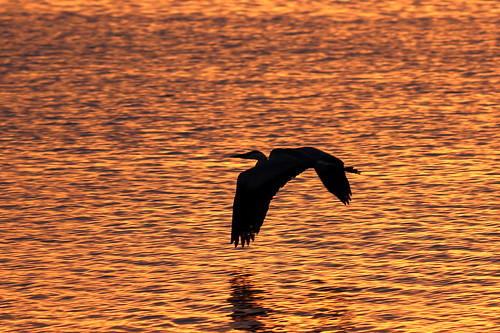 sunset ft desoto st pete florida boat ramp heron flight sundown 7dm2 canon