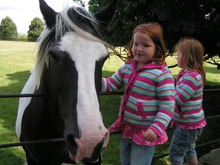 Horse, Ripley