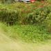 Small photo of Rain Garden in Balam Estate