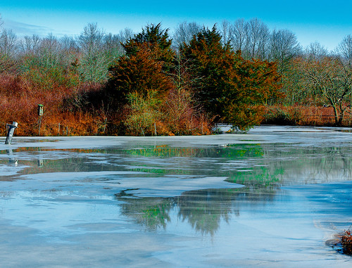 winter color reflection ice greatswamp colorphotoaward