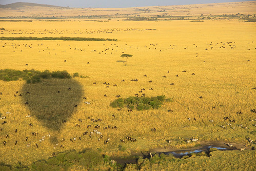 Hot air balloon safari over the Masai Mara