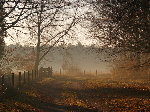 Countryside in the Mist, Suffolk, England