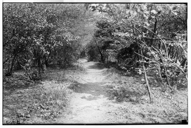 Native Flora Garden 1921