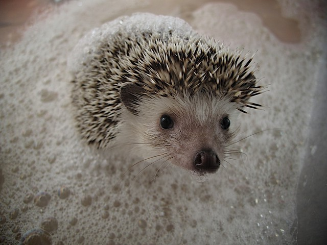 Bubble Bath time for Coco-Pop