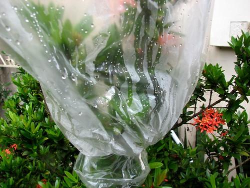 plant evapotranspiration in Rio Branco