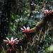 Bromeliads.