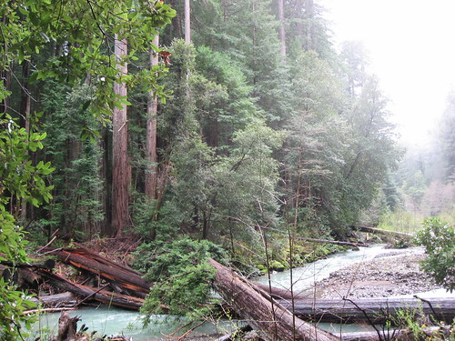 Redwoods at River's Edge