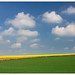 Rapeseed's fields by ekropka