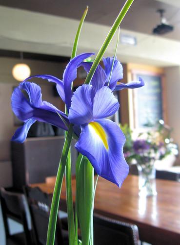 Irises at 8
