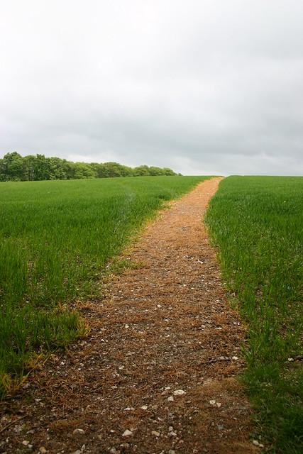 Perfect path