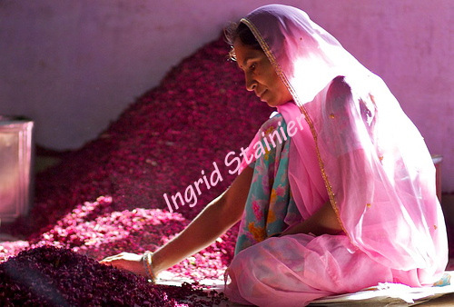 Pink Woman in Roses, Rajasthan, India _