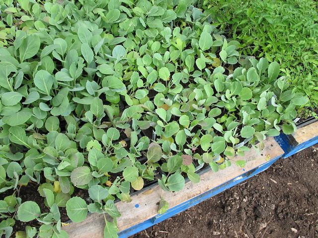 Vegetable plants for sale walmart