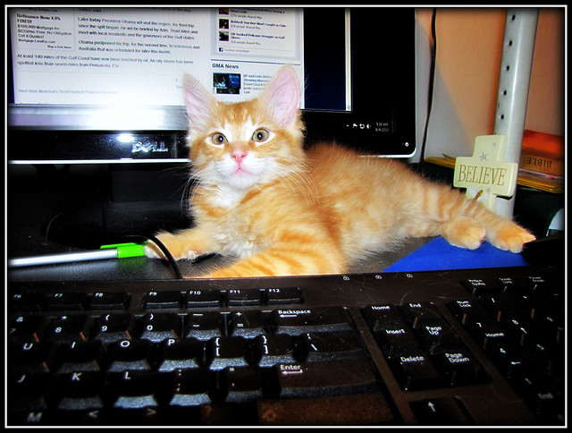 On the Internet, nobody knows you're a cat !