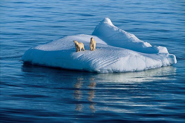 Polar Bears, by Paul Nicklen