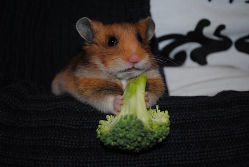 Broccoli Barry by majacapix