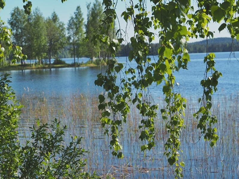 väinölänniemi-koivu-järvimaisema-suomi-finland-nature