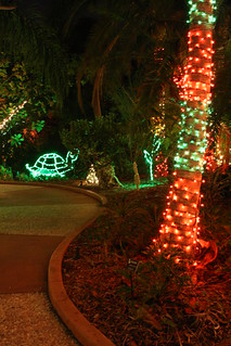 Christmas Lights @ Florida Botanical Gardens