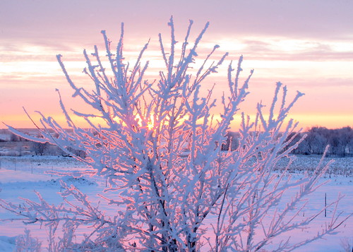 trees winter snow tree minnesota rural sunrise thechallengefactory