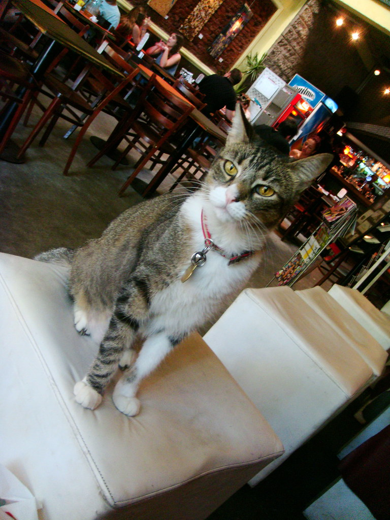 this cat just hung around inside the bar and chilled out with the customers.