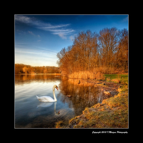 naturaleza holland nature amsterdam forest swan nikon thenetherlands iván hdr cisne nikond200 superaplus aplusphoto artistictouch ivánmaigua