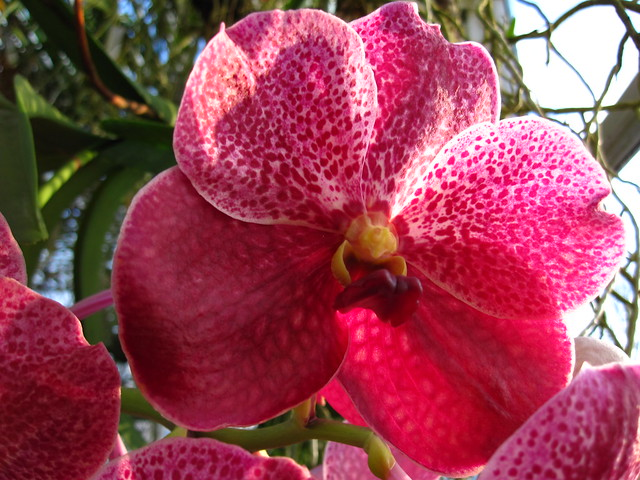 Just another sunny, warm, orchid filled day in the Robert W. Wilson Aquatic House. Photo by Rebecca Bullene