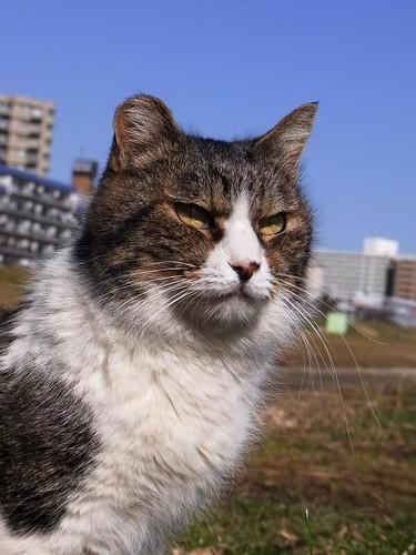 cat@多摩川