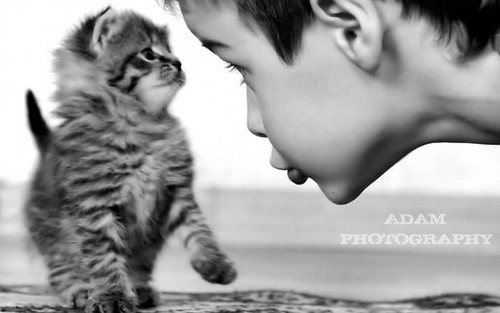 Kitty and Boy by aRe'Dam PicXtrem