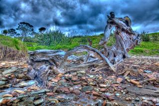 Изображение на Pohutukawa. newzealand cloud beach water hdr highdynamicrange stormclouds nzl aucklandregion northshorecity