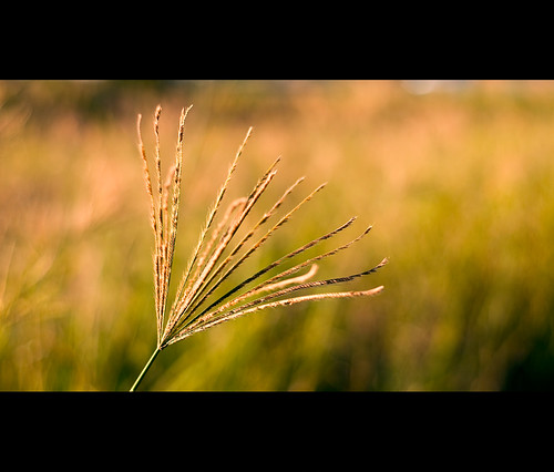 field grass 50mm nikon warm afternoon bokeh glowing f18 d300 polariser