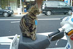 Peace the Cat Rides Again!