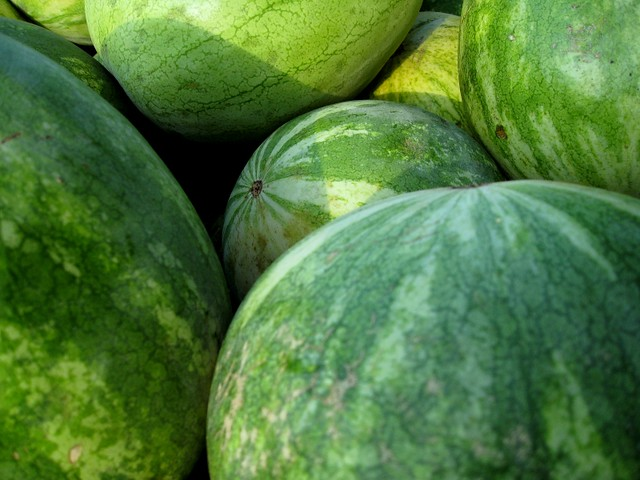 small watermelons 1 | Flickr - Photo Sharing!
