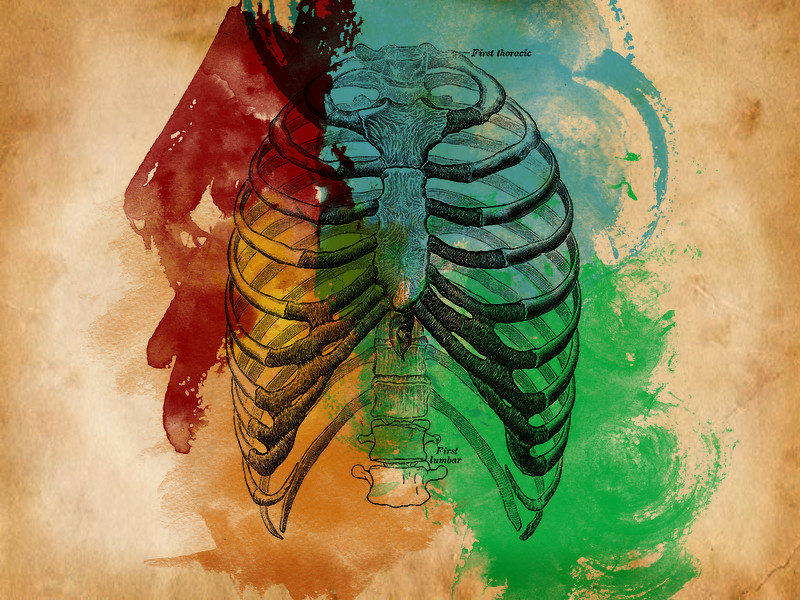 Ribcage Water Colors