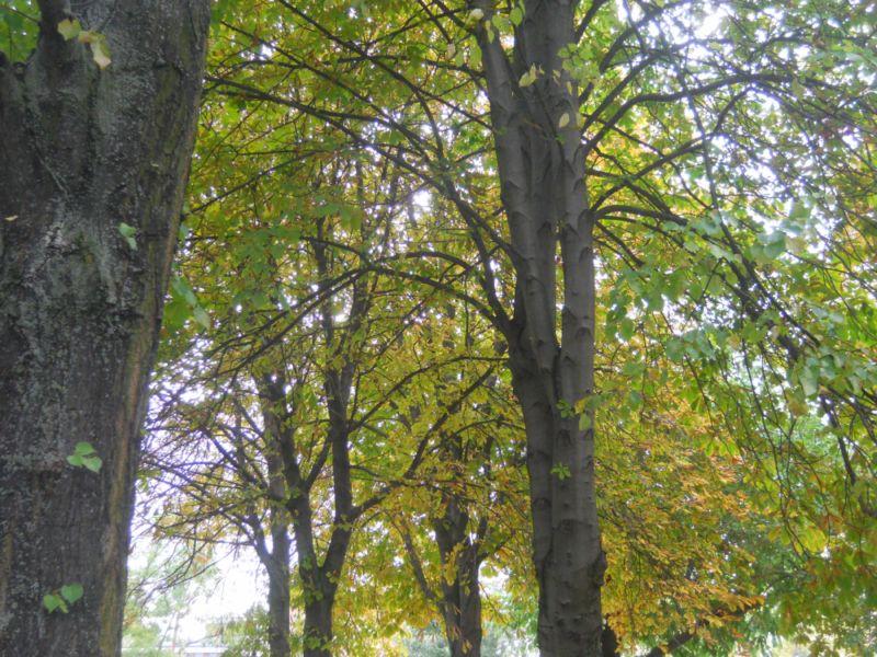 Árboles en otoño 5