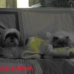 AMIGA & MAYA