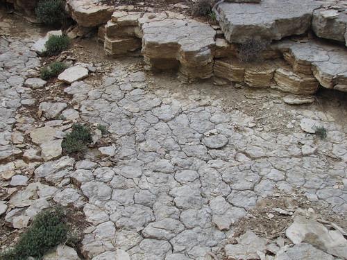 Grietas de desecación (Mud cracks) fósiles - Quesada (Jaén, España) - 01