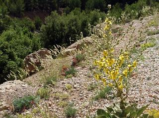 Turkey (Isparta) Wild flowers